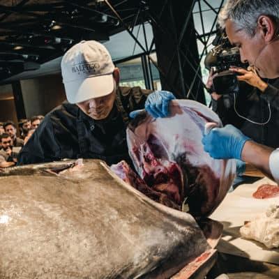 Ronqueo de un atún de 195 kilos en nuestro Salón Enredos.